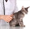 Ветеринарные клиники в Малоархангельске